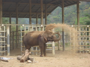 Mud blowing Elephant