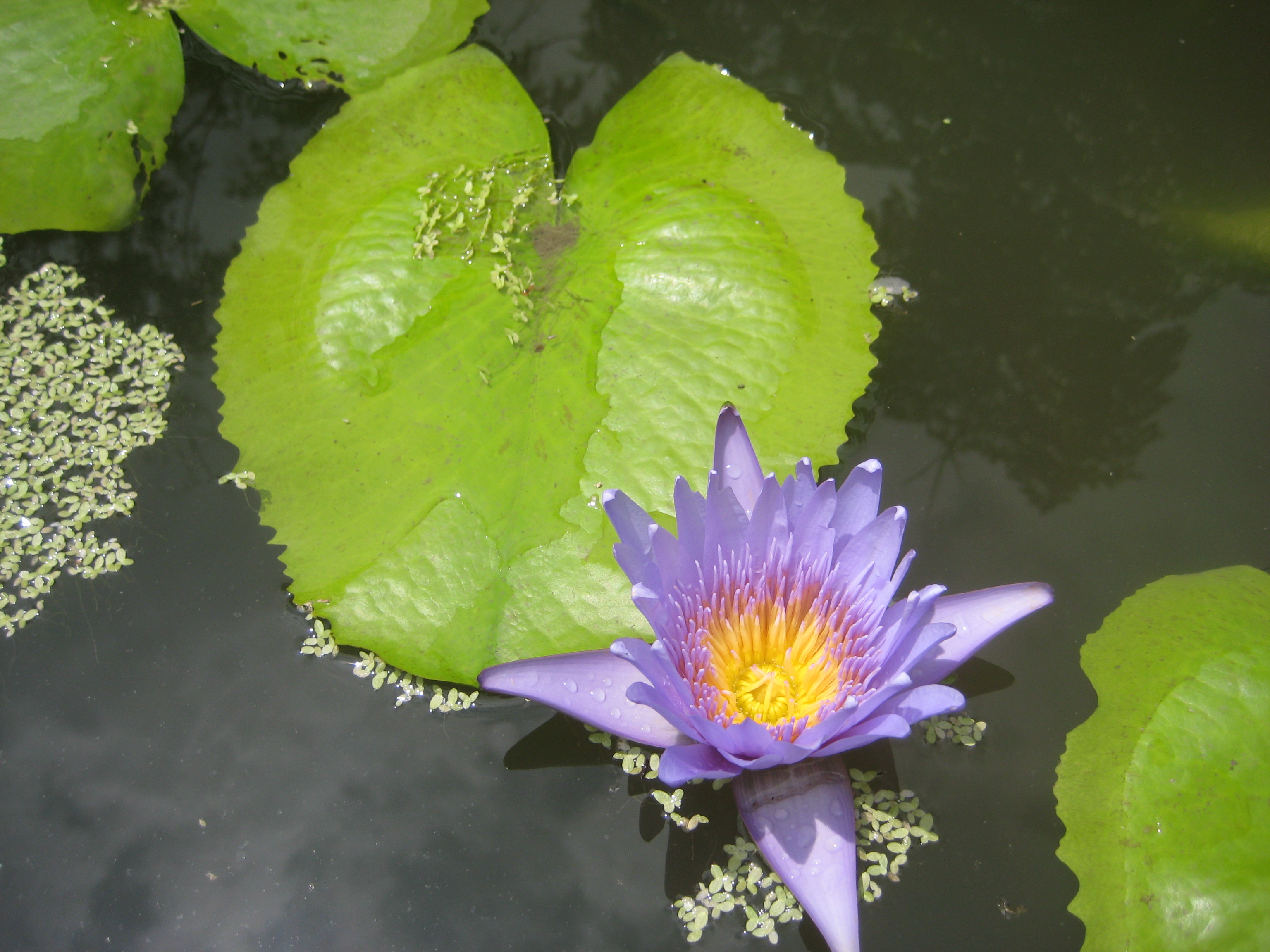e of the most popular flowers in Thailand