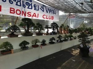 Bonsai Club competition